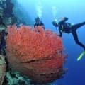 plongee-bunaken-sulawesi-indonesie-28