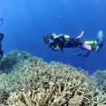 plongee-bunaken-sulawesi-indonesie-29