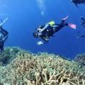 plongee-bunaken-sulawesi-indonesie-30