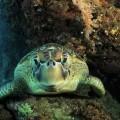 plongee-bunaken-sulawesi-indonesie-35
