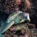 plongee-bunaken-sulawesi-indonesie-36