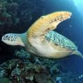 plongee-bunaken-sulawesi-indonesie-37