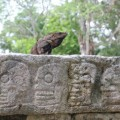 chichen-itza-mexique-19
