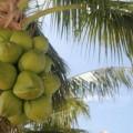 isla-mujeres-mexique-15